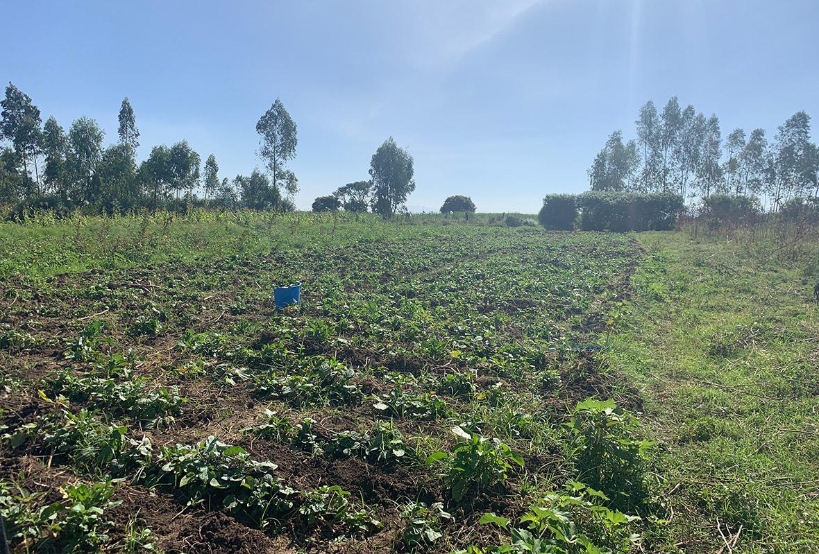 Anbau am eigenen großen Feld